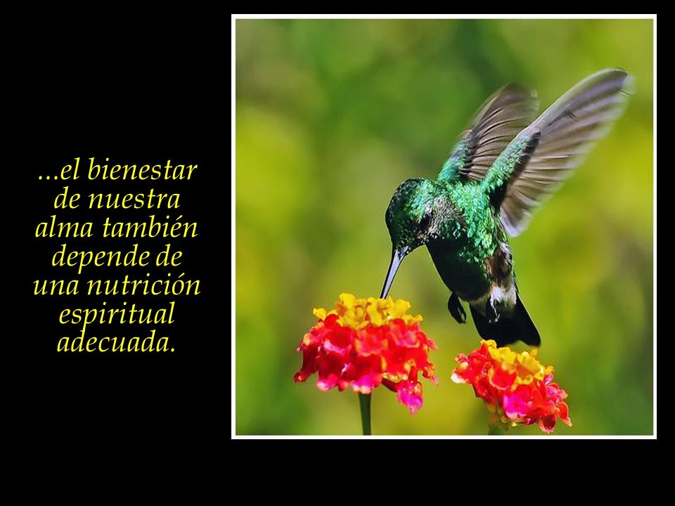 ...el bienestar de nuestra alma también depende de una nutrición espiritual adecuada.