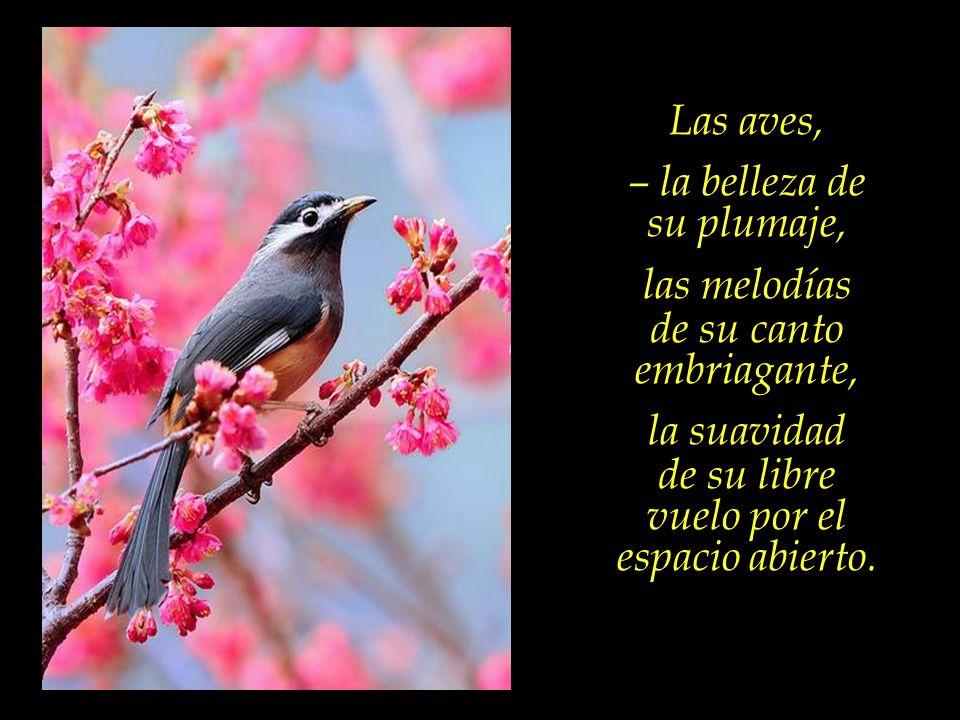 – la belleza de su plumaje, las melodías de su canto embriagante,