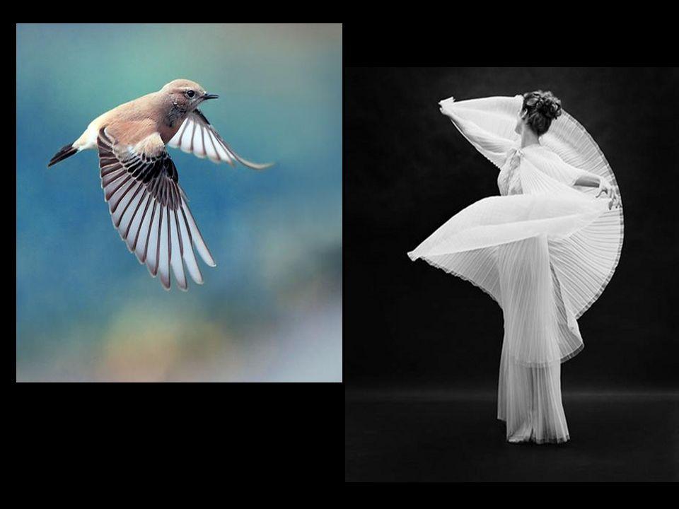 Metáforas visuales y poéticas