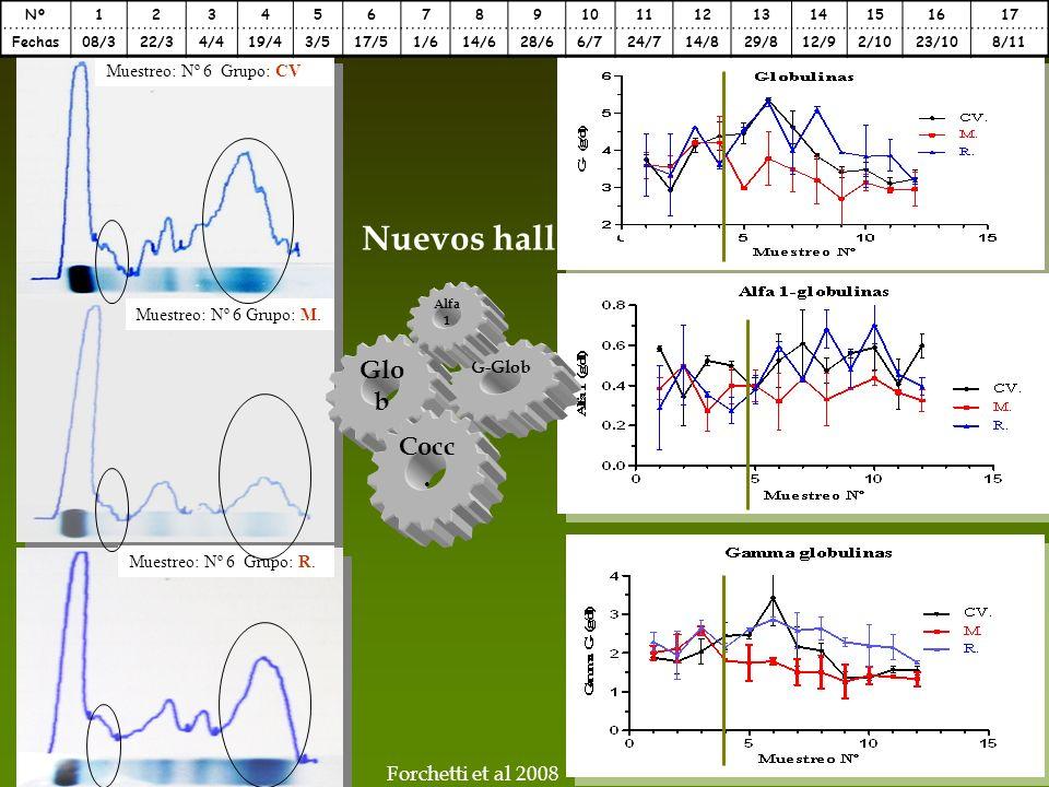 Nuevos hallazgos Glob Cocc. Forchetti et al 2008