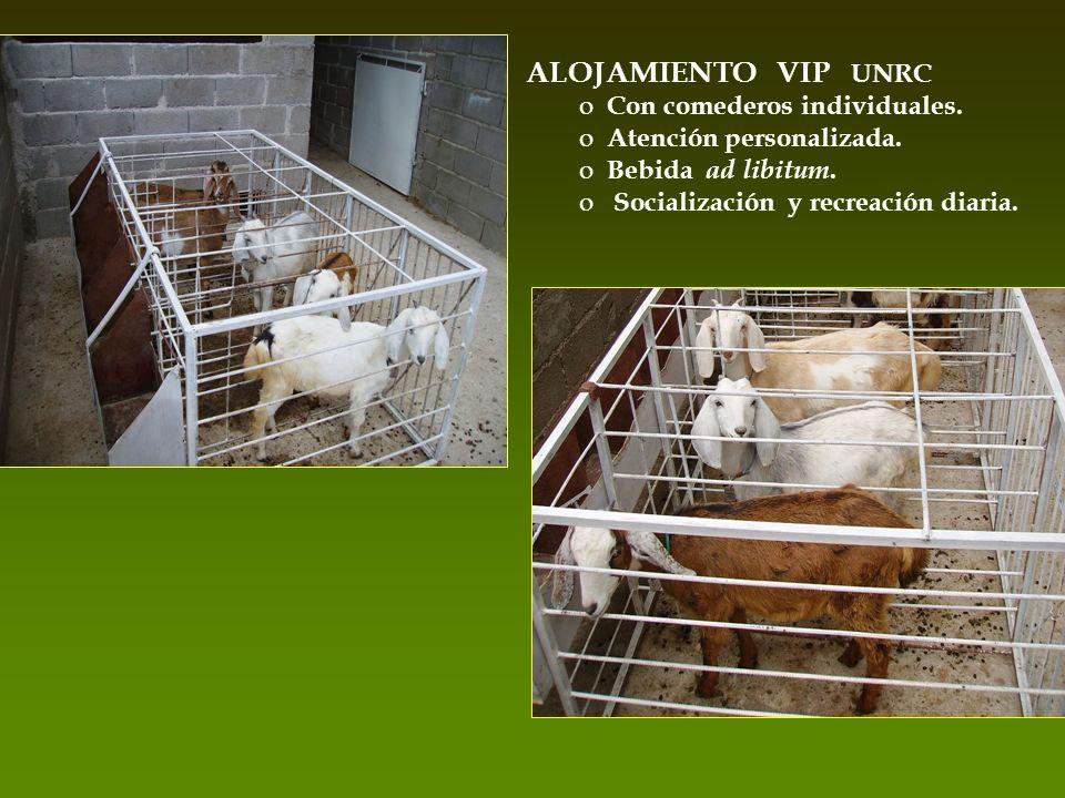 ALOJAMIENTO VIP UNRC Con comederos individuales.