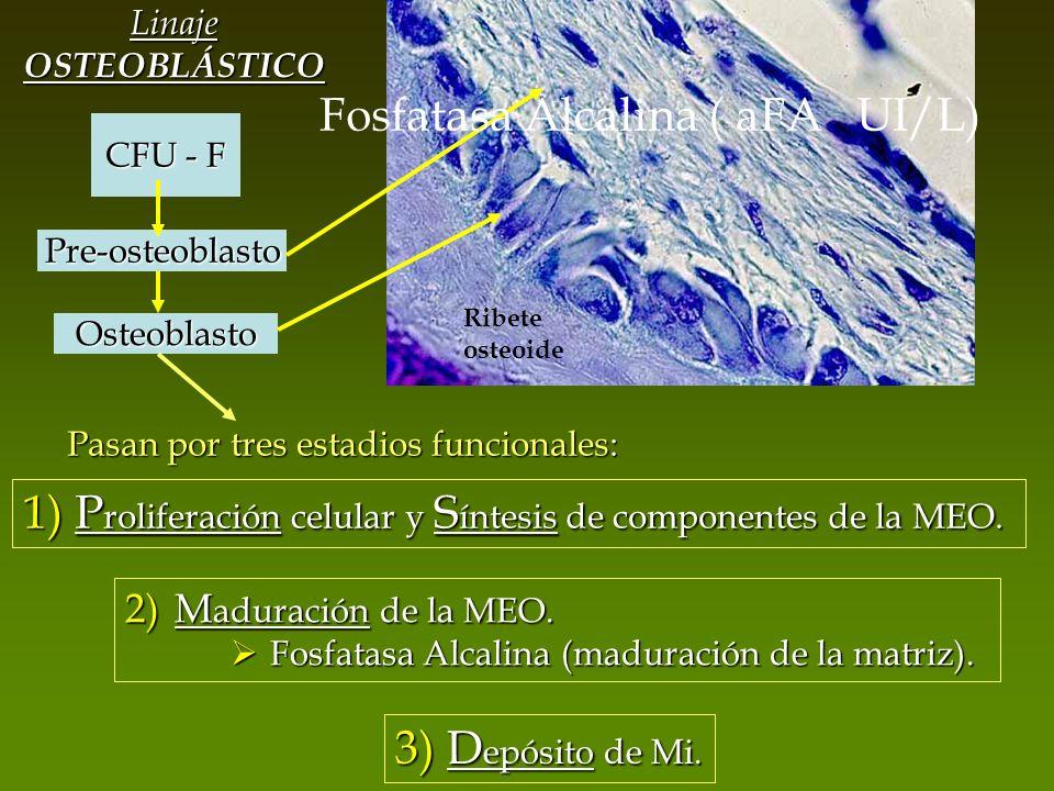 Fosfatasa Alcalina ( aFA UI/L)