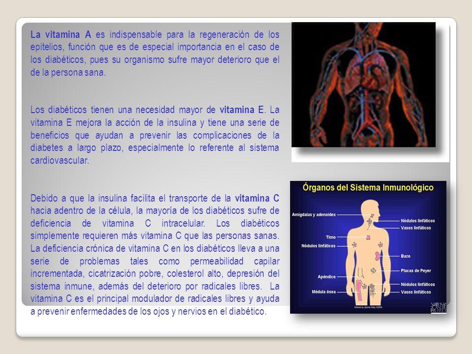La vitamina A es indispensable para la regeneración de los epitelios, función que es de especial importancia en el caso de los diabéticos, pues su organismo sufre mayor deterioro que el de la persona sana.