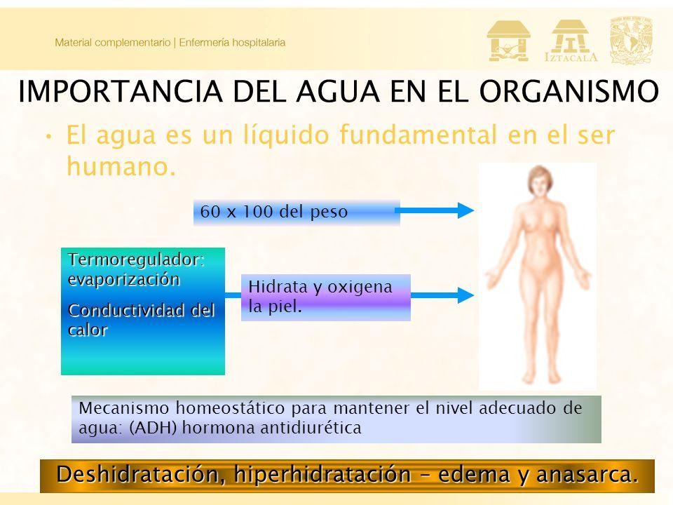 IMPORTANCIA DEL AGUA EN EL ORGANISMO