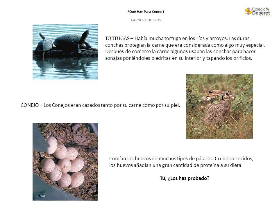 CONEJO – Los Conejos eran cazados tanto por su carne como por su piel.