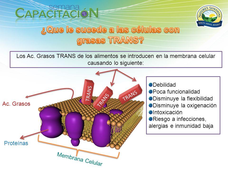¿Que le sucede a las células con grasas TRANS