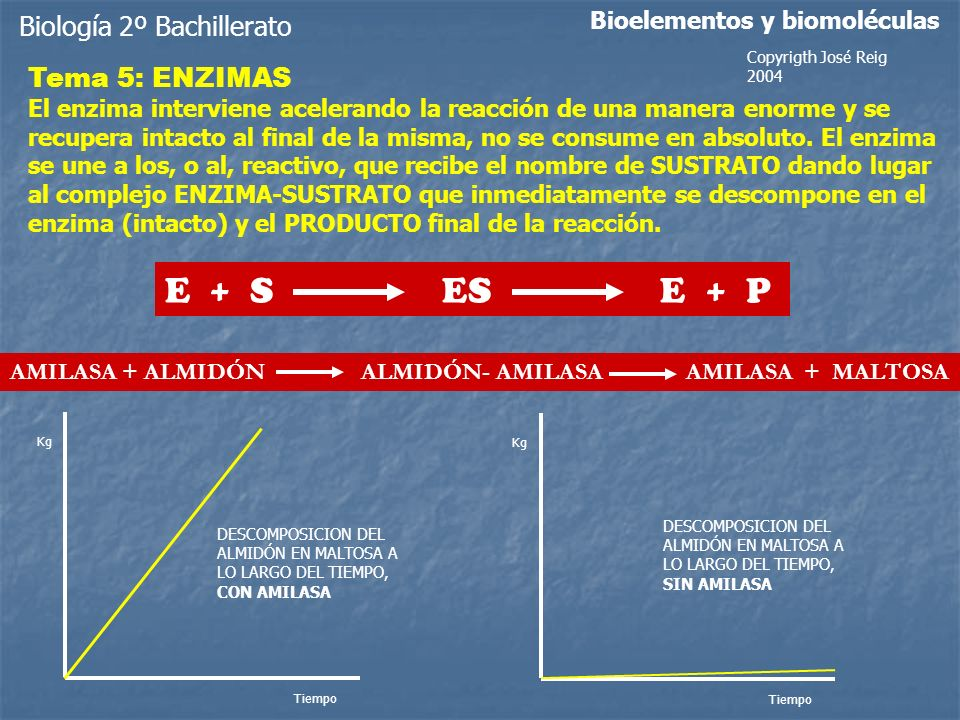 E + S ES E + P Biología 2º Bachillerato Tema 5: ENZIMAS