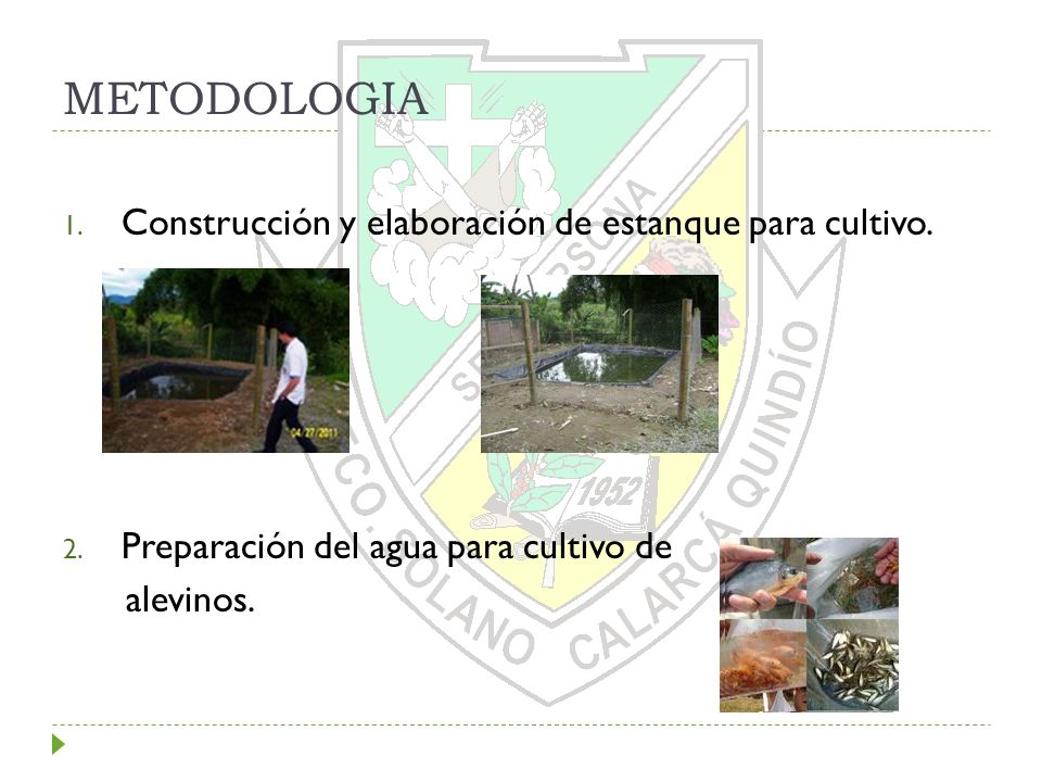 METODOLOGIA Construcción y elaboración de estanque para cultivo.