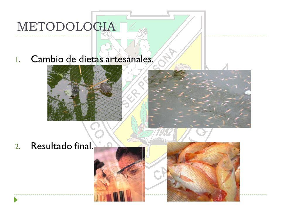 METODOLOGIA Cambio de dietas artesanales. Resultado final.