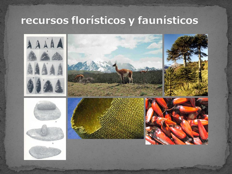 recursos florísticos y faunísticos