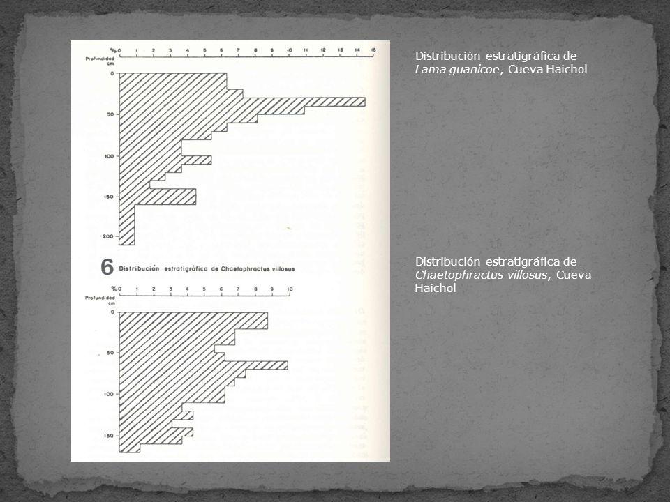 Distribución estratigráfica de Lama guanicoe, Cueva Haichol