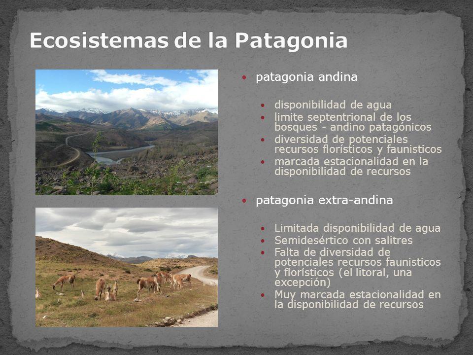 Ecosistemas de la Patagonia