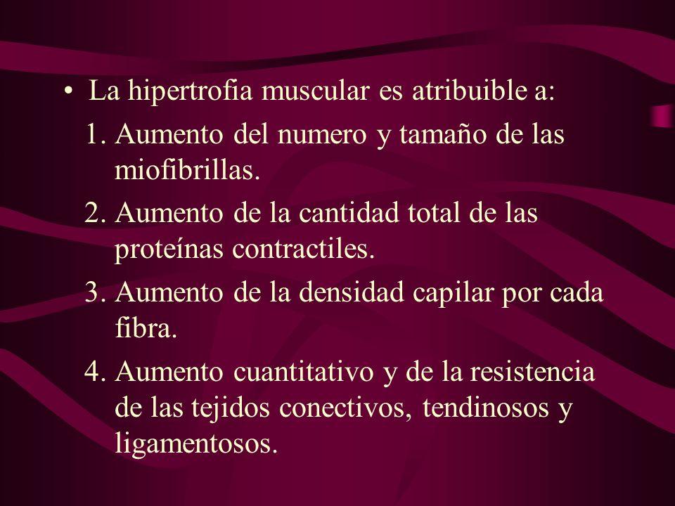 La hipertrofia muscular es atribuible a: