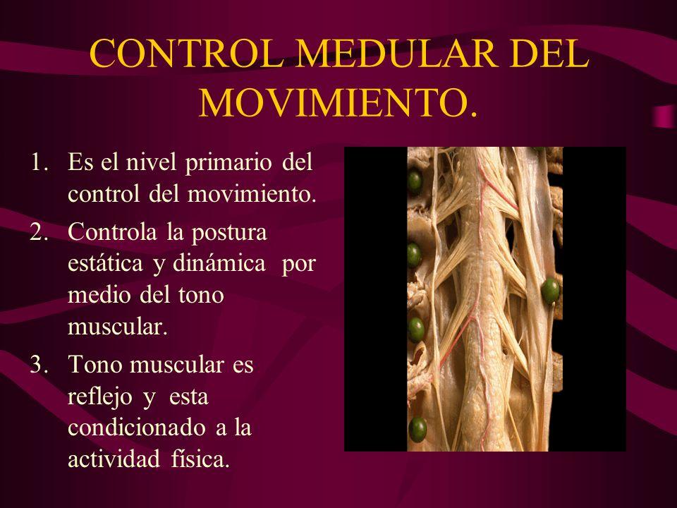 CONTROL MEDULAR DEL MOVIMIENTO.