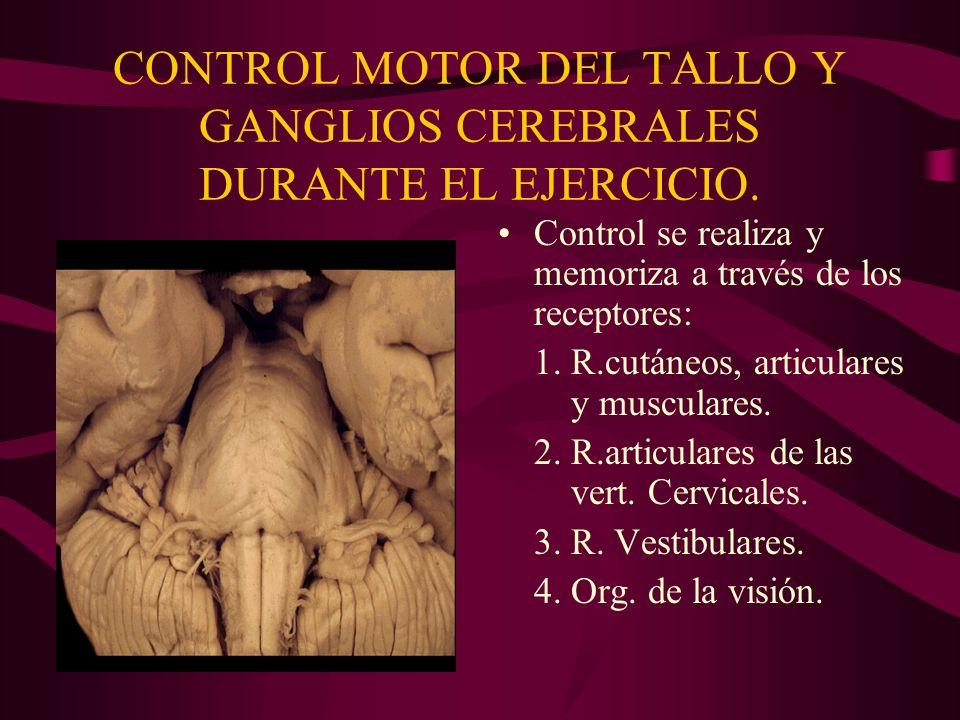 CONTROL MOTOR DEL TALLO Y GANGLIOS CEREBRALES DURANTE EL EJERCICIO.