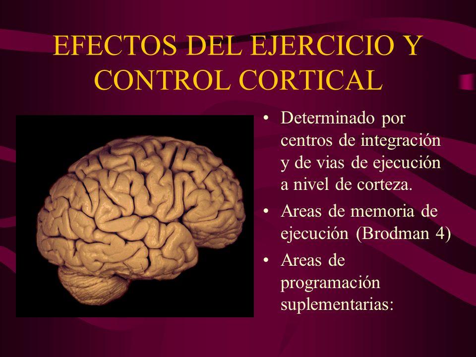 EFECTOS DEL EJERCICIO Y CONTROL CORTICAL
