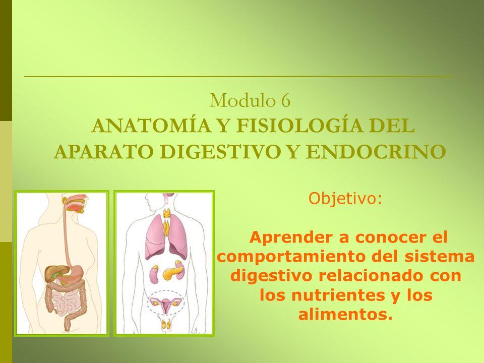 Modulo 6 ANATOMÍA Y FISIOLOGÍA DEL APARATO DIGESTIVO Y ENDOCRINO