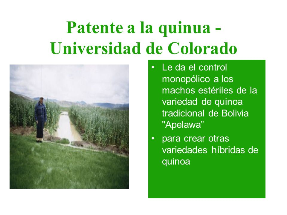 Patente a la quinua - Universidad de Colorado