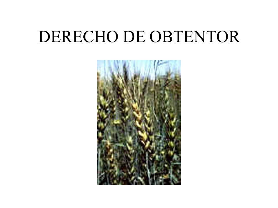 DERECHO DE OBTENTOR