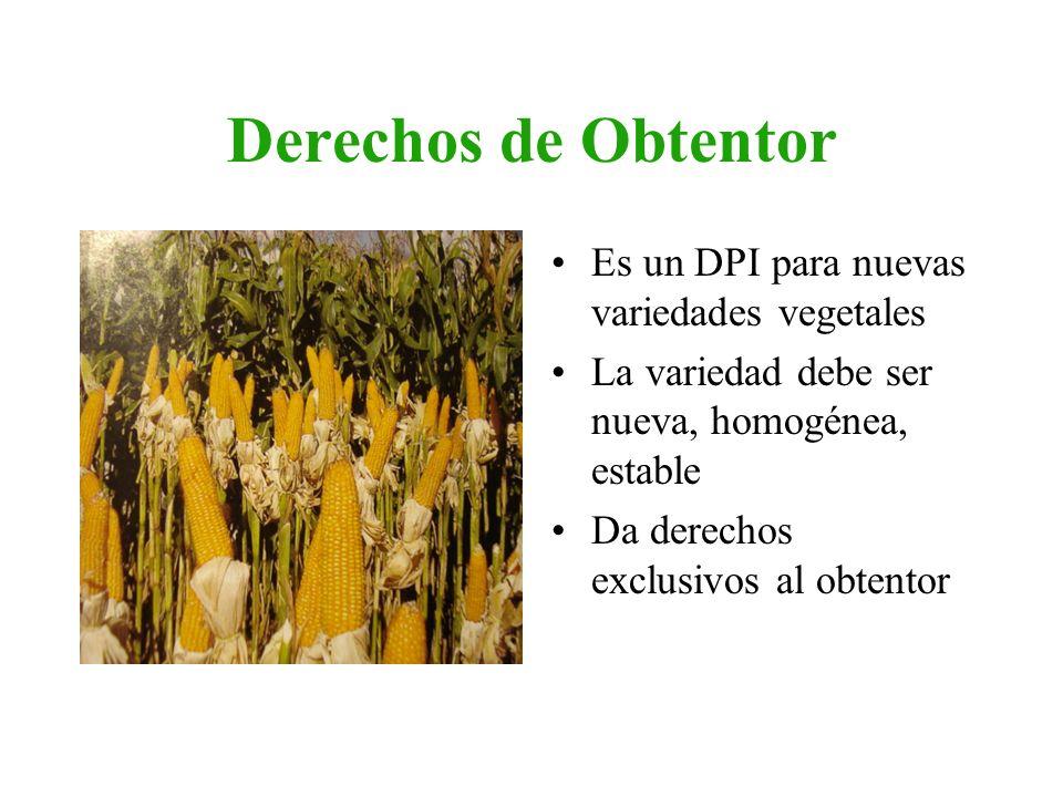Derechos de Obtentor Es un DPI para nuevas variedades vegetales