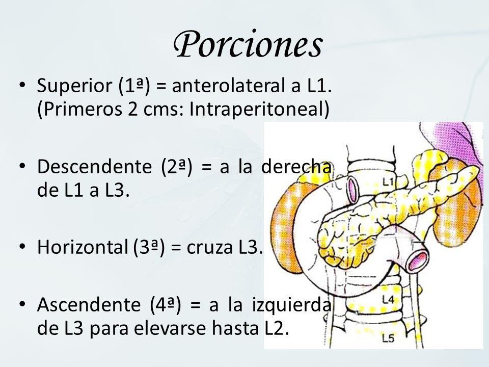 Porciones Superior (1ª) = anterolateral a L1. (Primeros 2 cms: Intraperitoneal) Descendente (2ª) = a la derecha de L1 a L3.