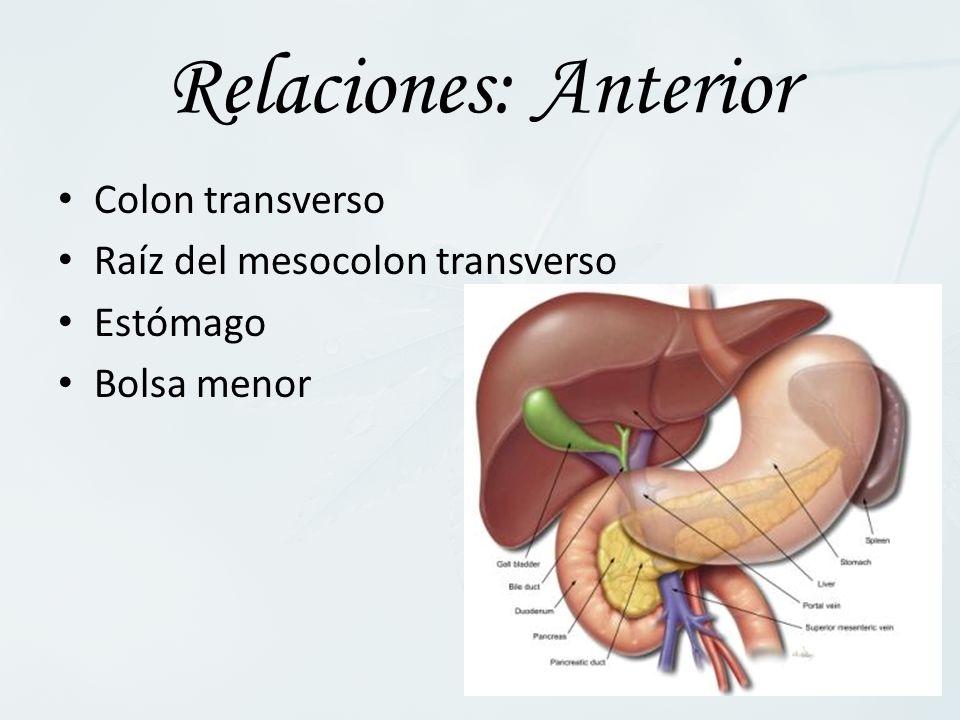 Relaciones: Anterior Colon transverso Raíz del mesocolon transverso