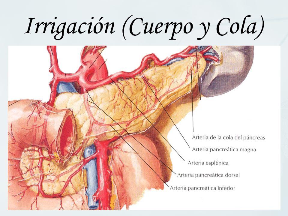 Irrigación (Cuerpo y Cola)