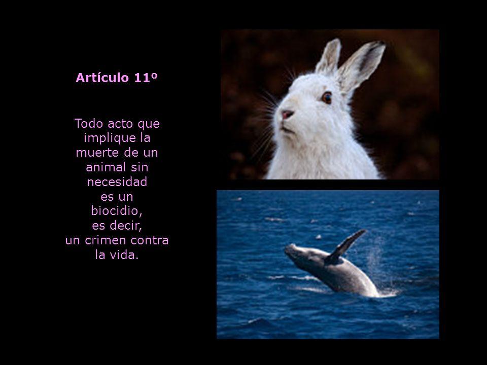 Todo acto que implique la muerte de un animal sin necesidad