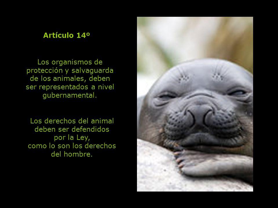 Los derechos del animal deben ser defendidos por la Ley,