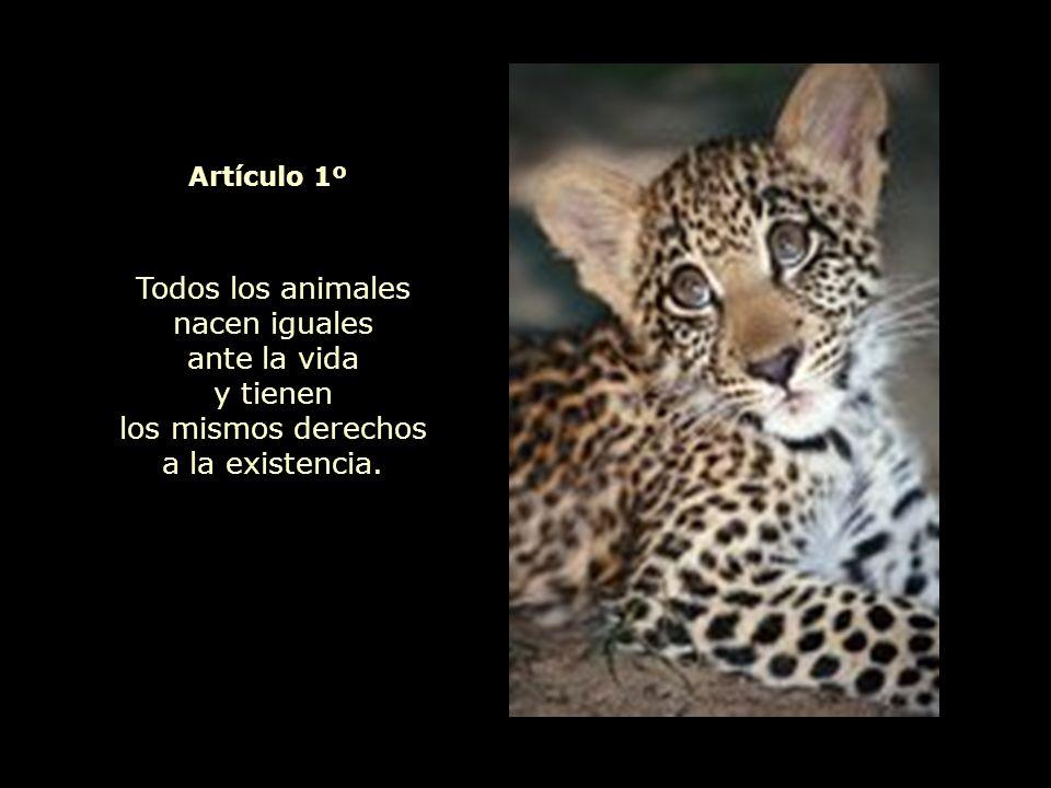 Todos los animales nacen iguales ante la vida y tienen