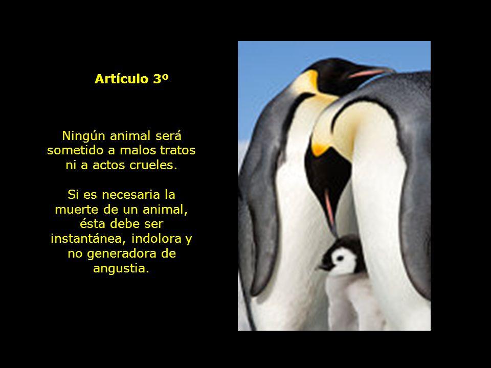 Ningún animal será sometido a malos tratos ni a actos crueles.