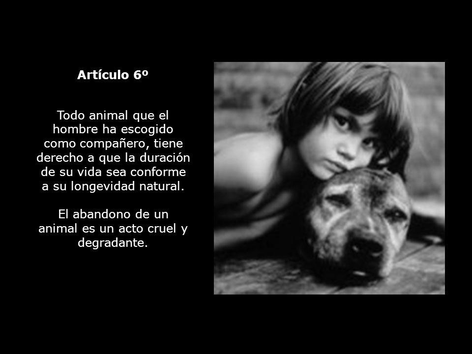 El abandono de un animal es un acto cruel y degradante.