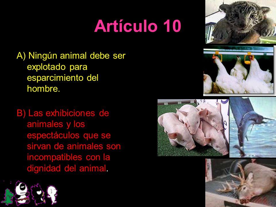 Artículo 10 A) Ningún animal debe ser explotado para esparcimiento del hombre.
