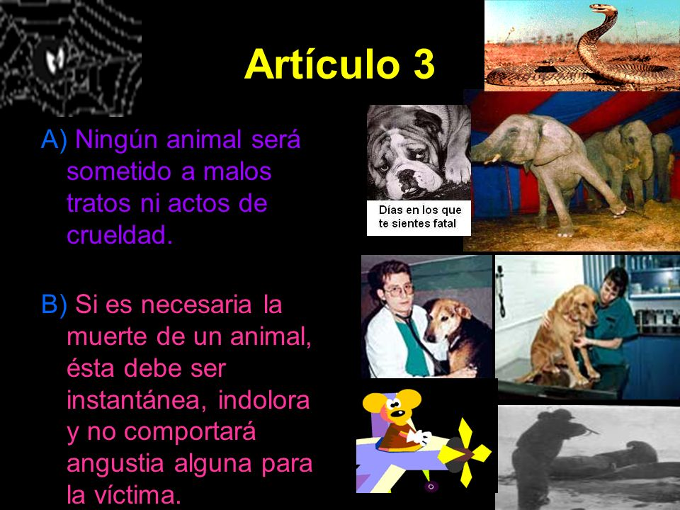 Artículo 3 A) Ningún animal será sometido a malos tratos ni actos de crueldad.
