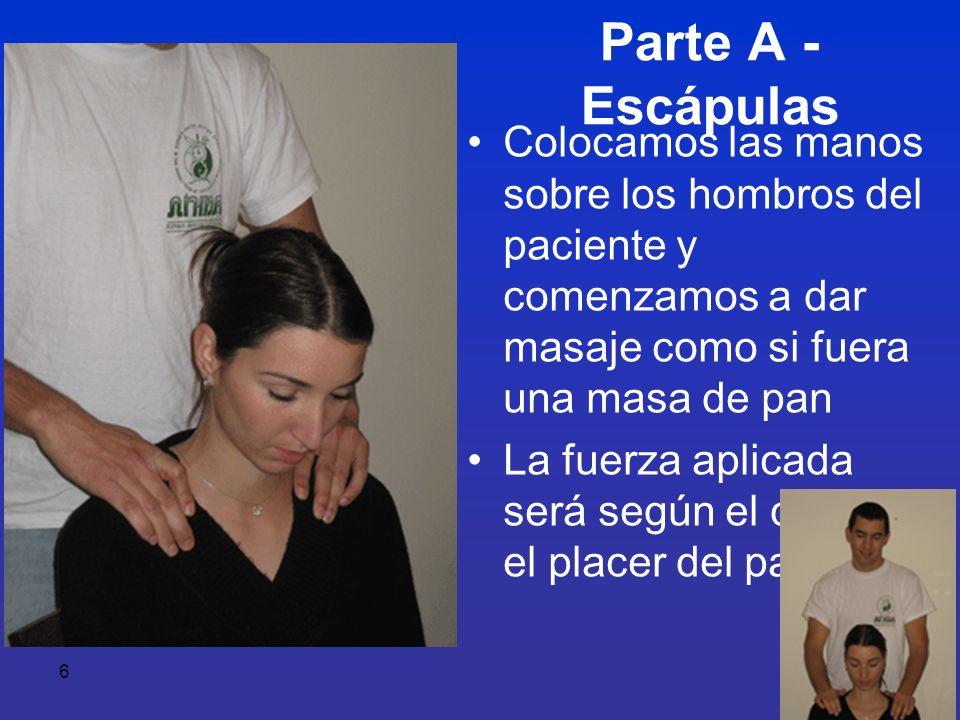 Parte A - Escápulas Colocamos las manos sobre los hombros del paciente y comenzamos a dar masaje como si fuera una masa de pan.