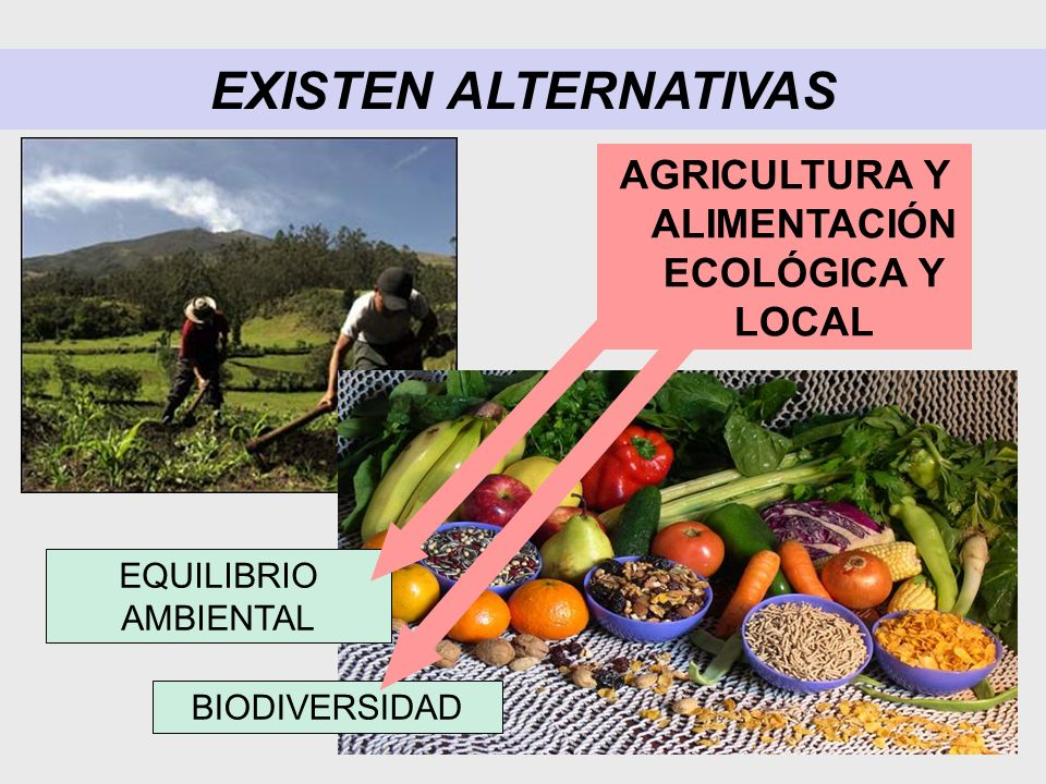 AGRICULTURA Y ALIMENTACIÓN ECOLÓGICA Y LOCAL