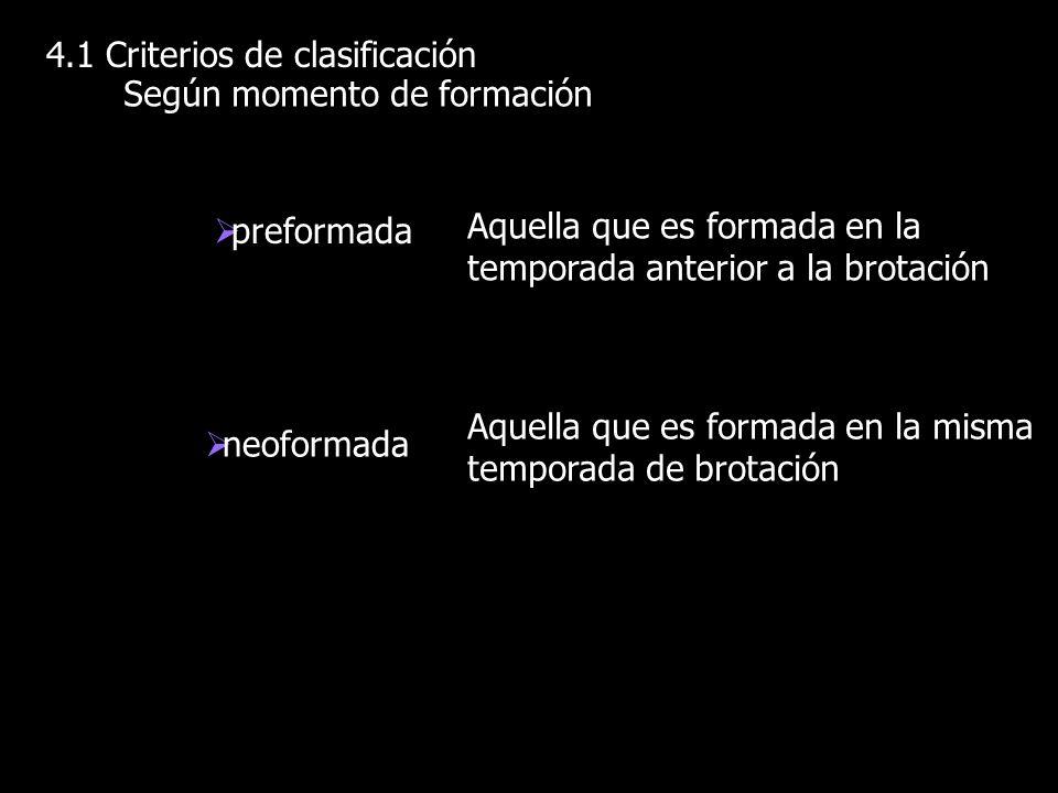 4.1 Criterios de clasificación