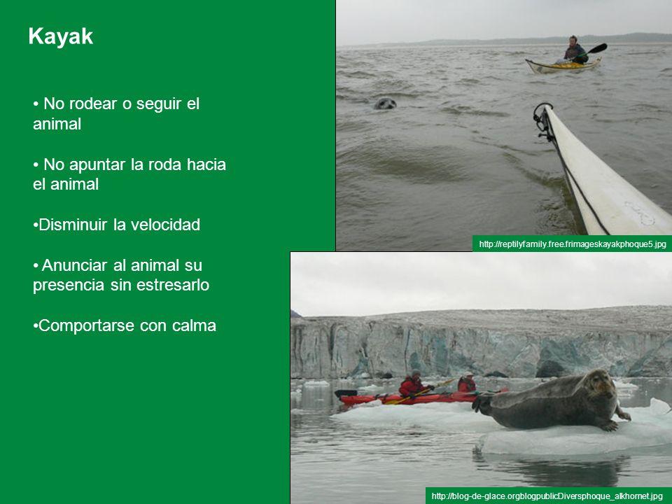 Kayak No rodear o seguir el animal No apuntar la roda hacia el animal