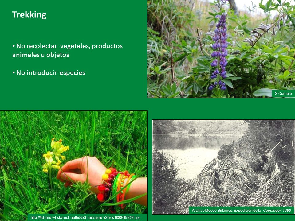 Trekking No recolectar vegetales, productos animales u objetos