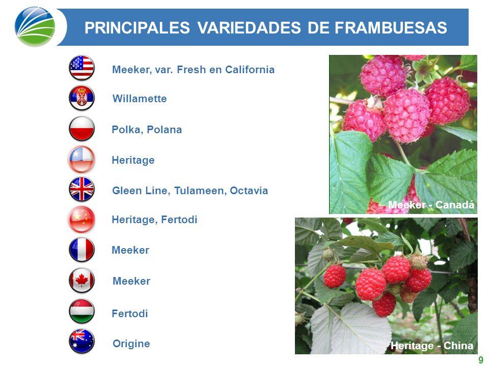 PRINCIPALES VARIEDADES DE FRAMBUESAS