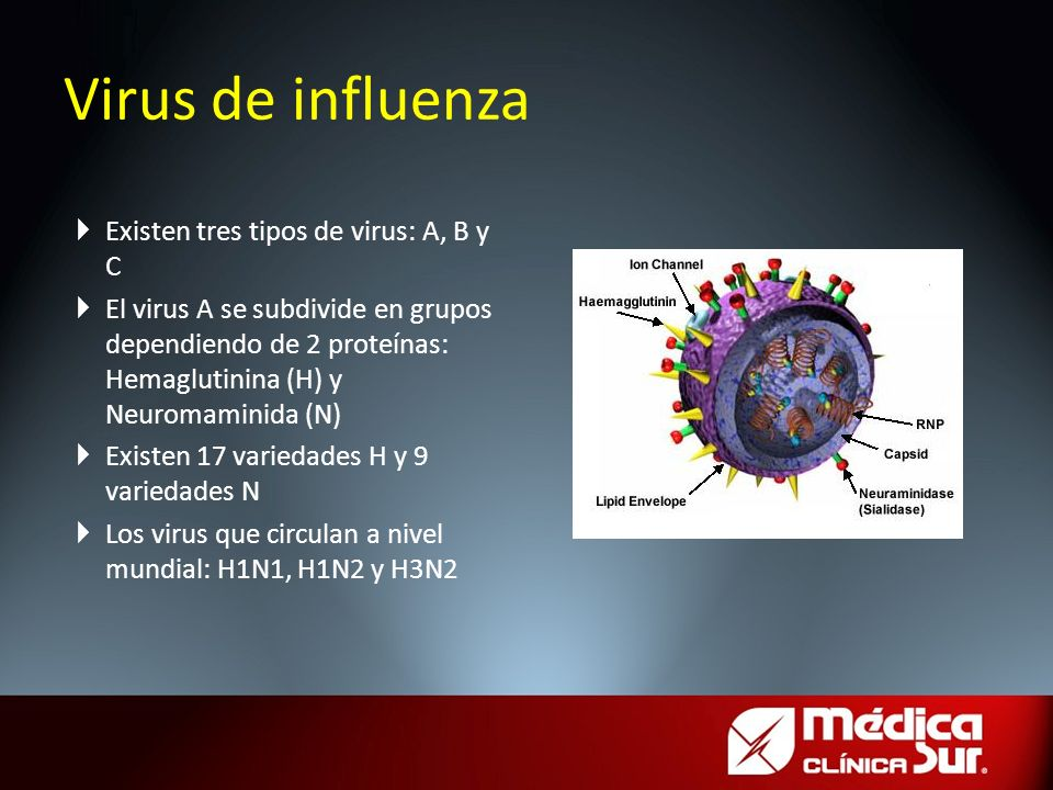 Virus de influenza Existen tres tipos de virus: A, B y C