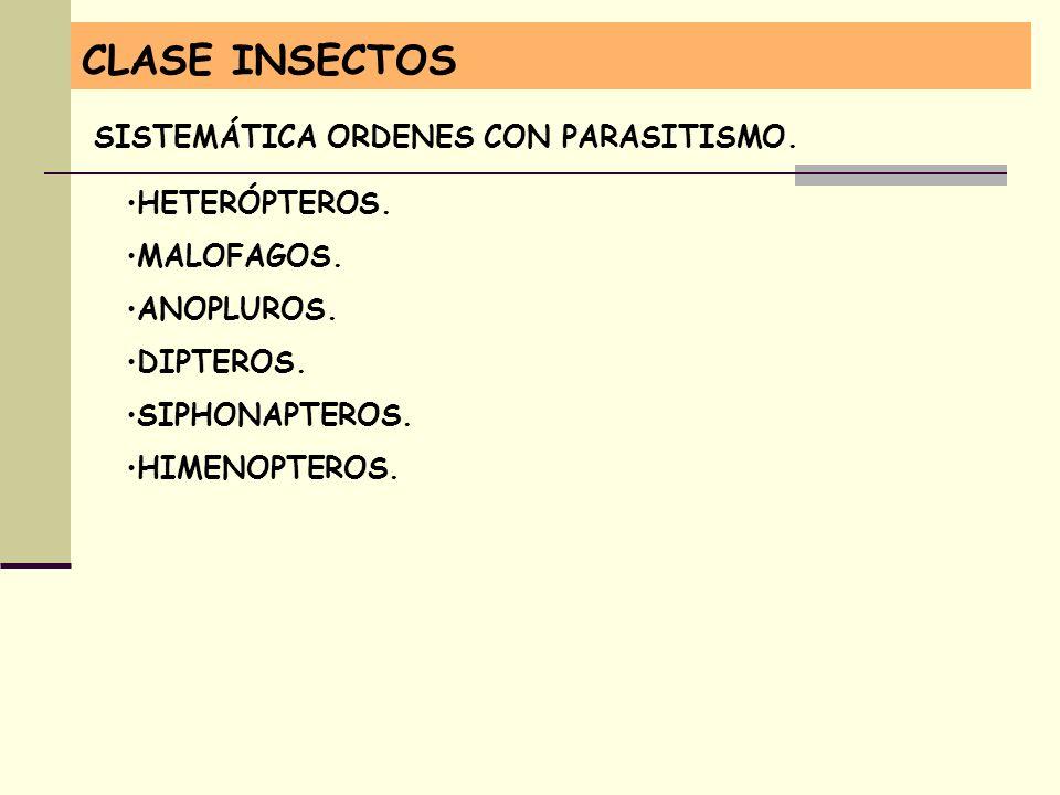 CLASE INSECTOS SISTEMÁTICA ORDENES CON PARASITISMO. HETERÓPTEROS.