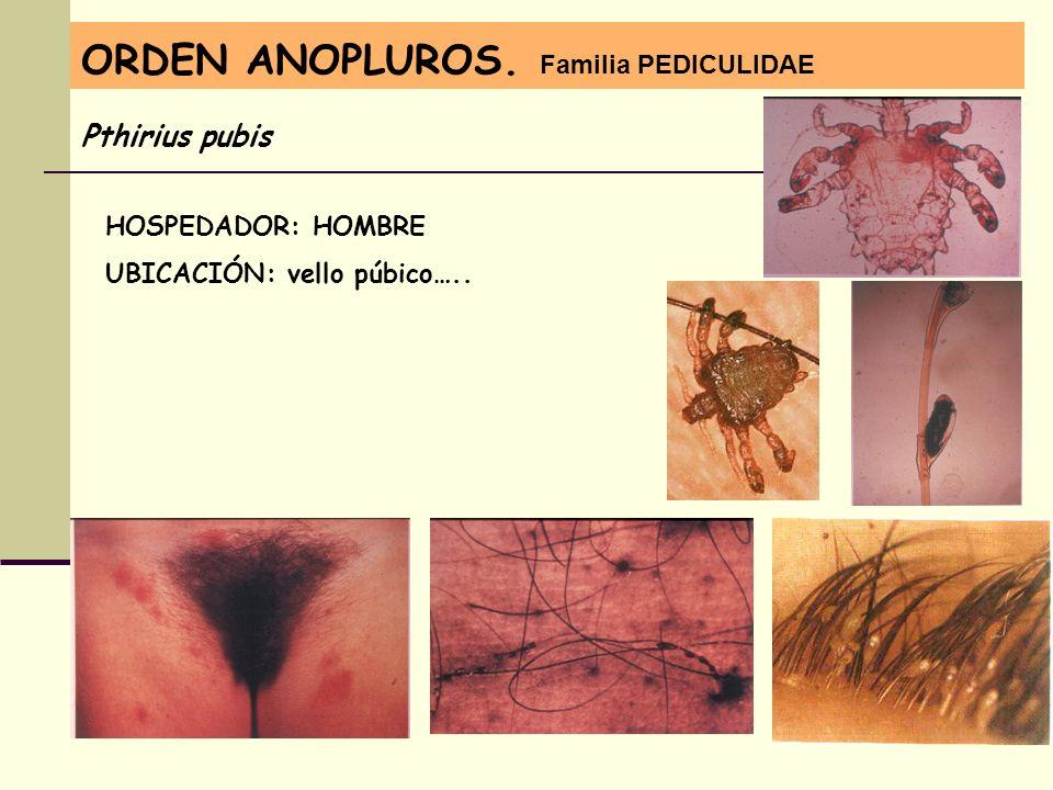 ORDEN ANOPLUROS. Familia PEDICULIDAE