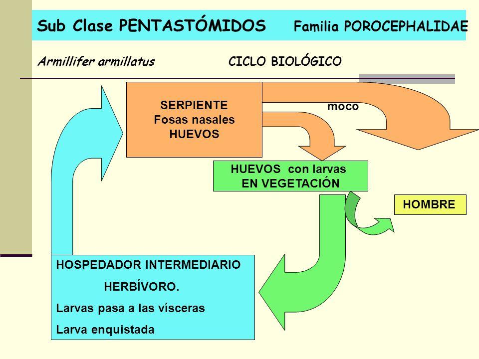 Sub Clase PENTASTÓMIDOS