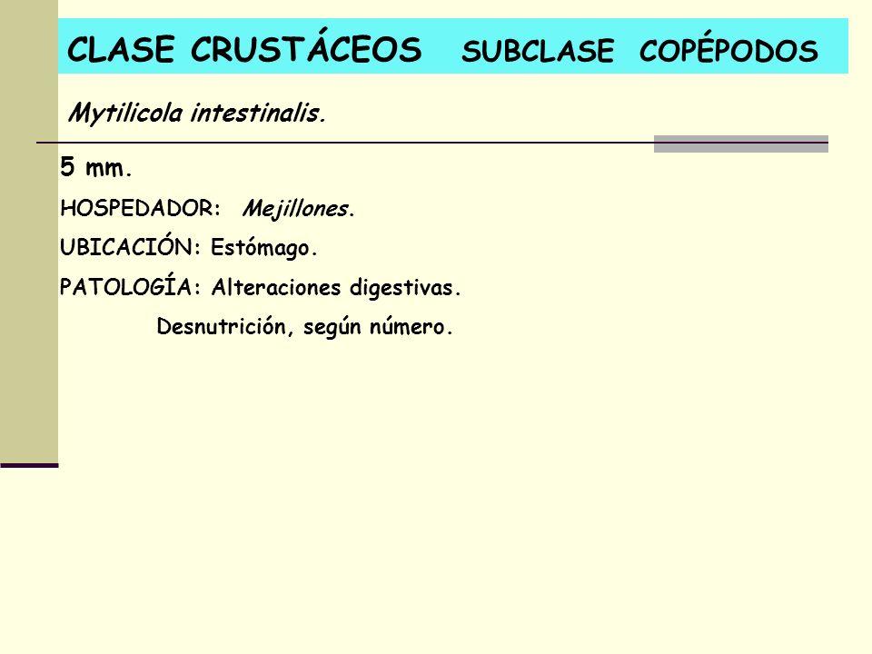 CLASE CRUSTÁCEOS SUBCLASE COPÉPODOS