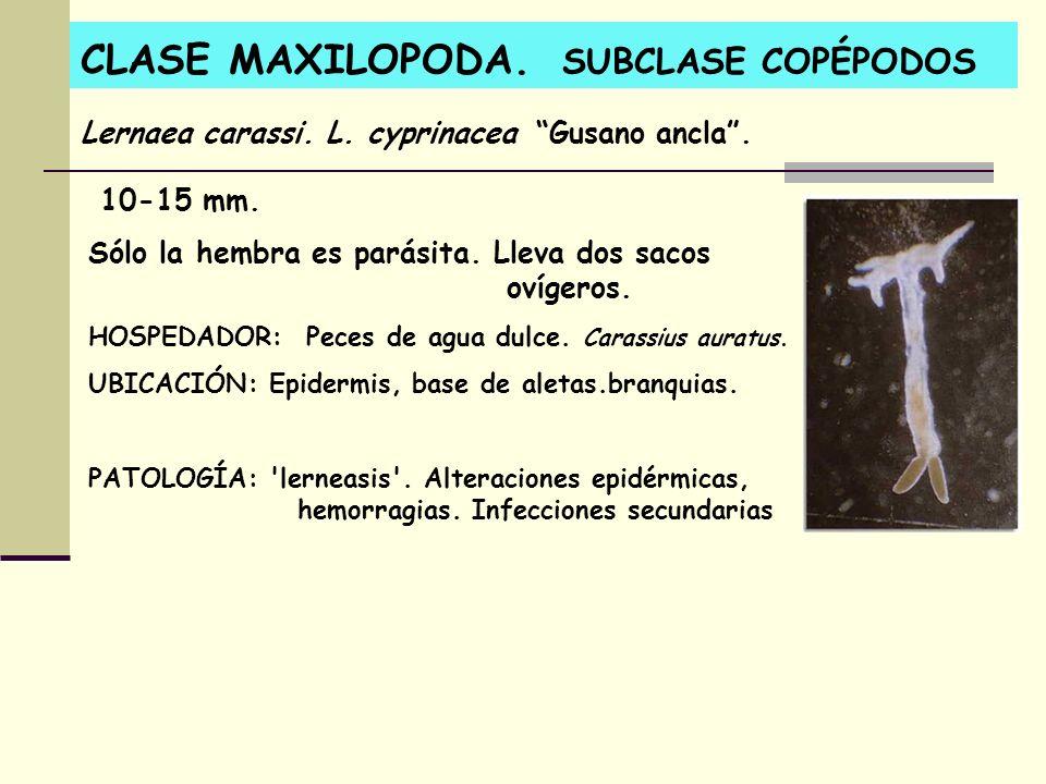 CLASE MAXILOPODA. SUBCLASE COPÉPODOS