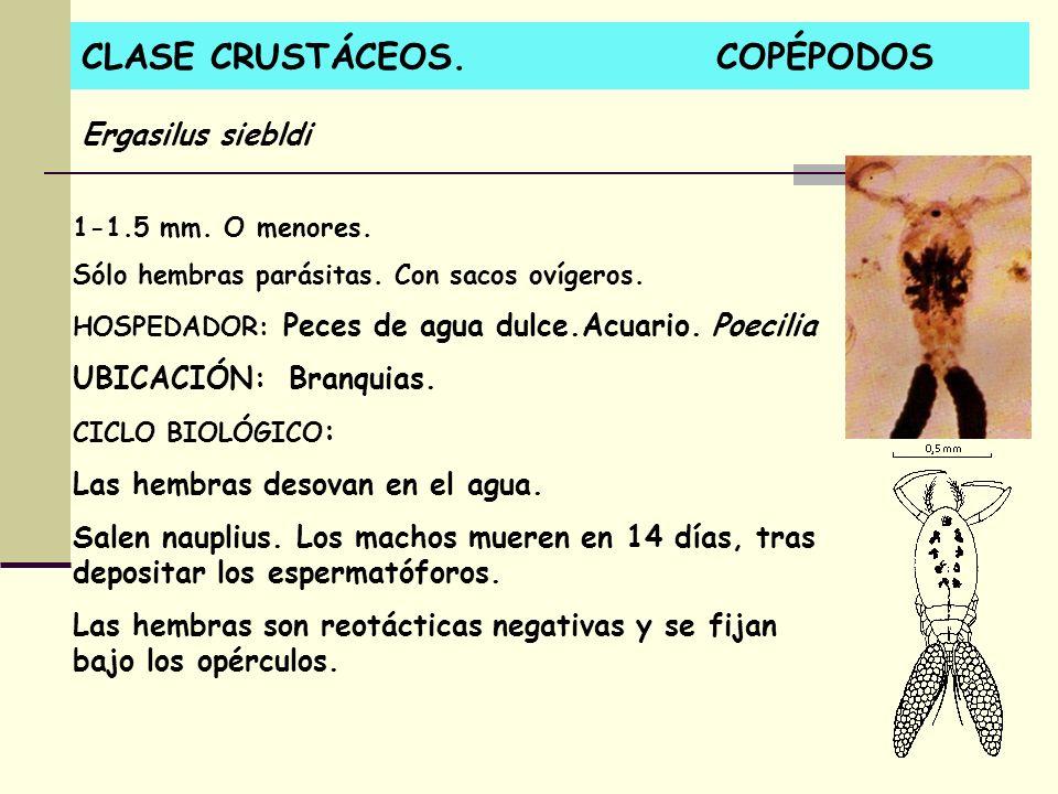 CLASE CRUSTÁCEOS. COPÉPODOS