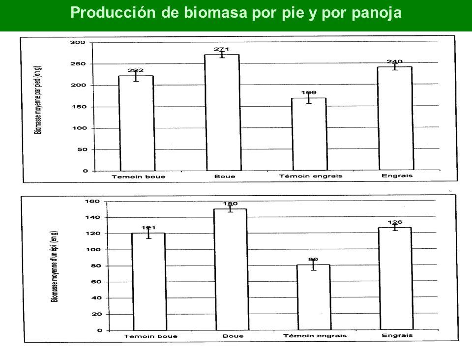 Producción de biomasa por pie y por panoja