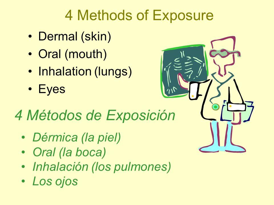 4 Methods of Exposure 4 Métodos de Exposición Dermal (skin)