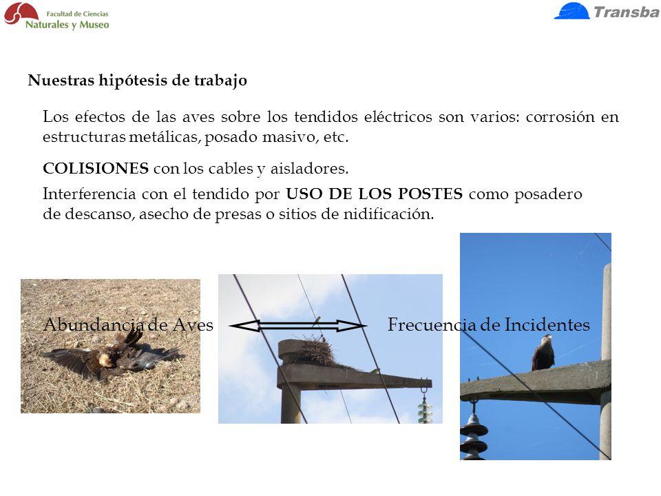 Abundancia de Aves Frecuencia de Incidentes